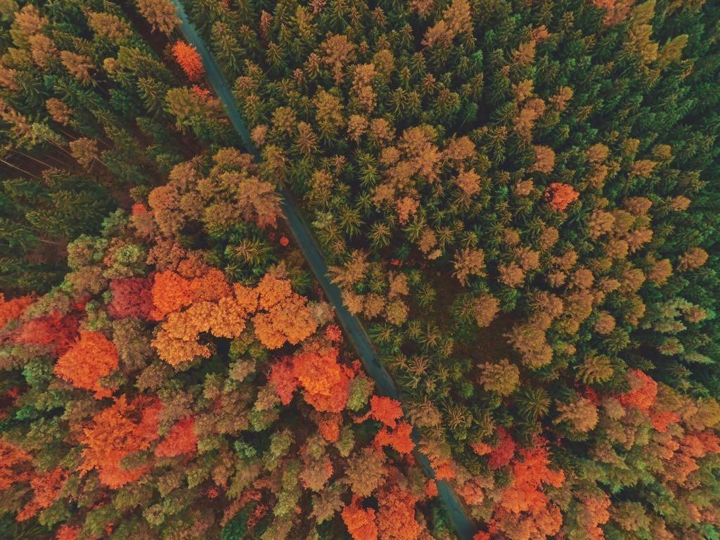 Wald draufsicht