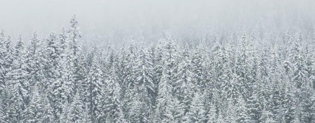 winterwald-1140-445